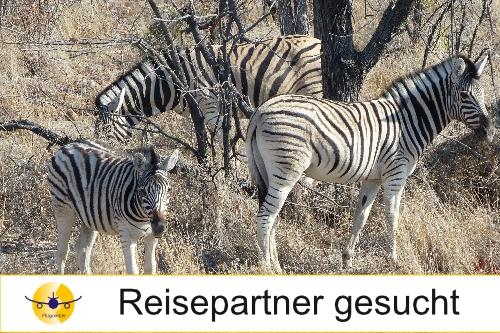Reisepartner für Südafrika gesucht